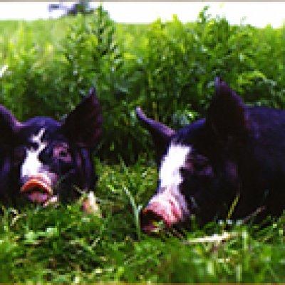 画像2: 黒豚しゃぶセット 2人前 (1-0051)